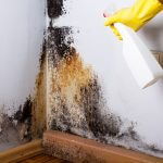 Tips On How To Get Rid Of Mold