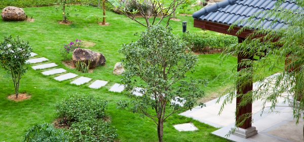 The Best Time To Plant Trees On Your Property